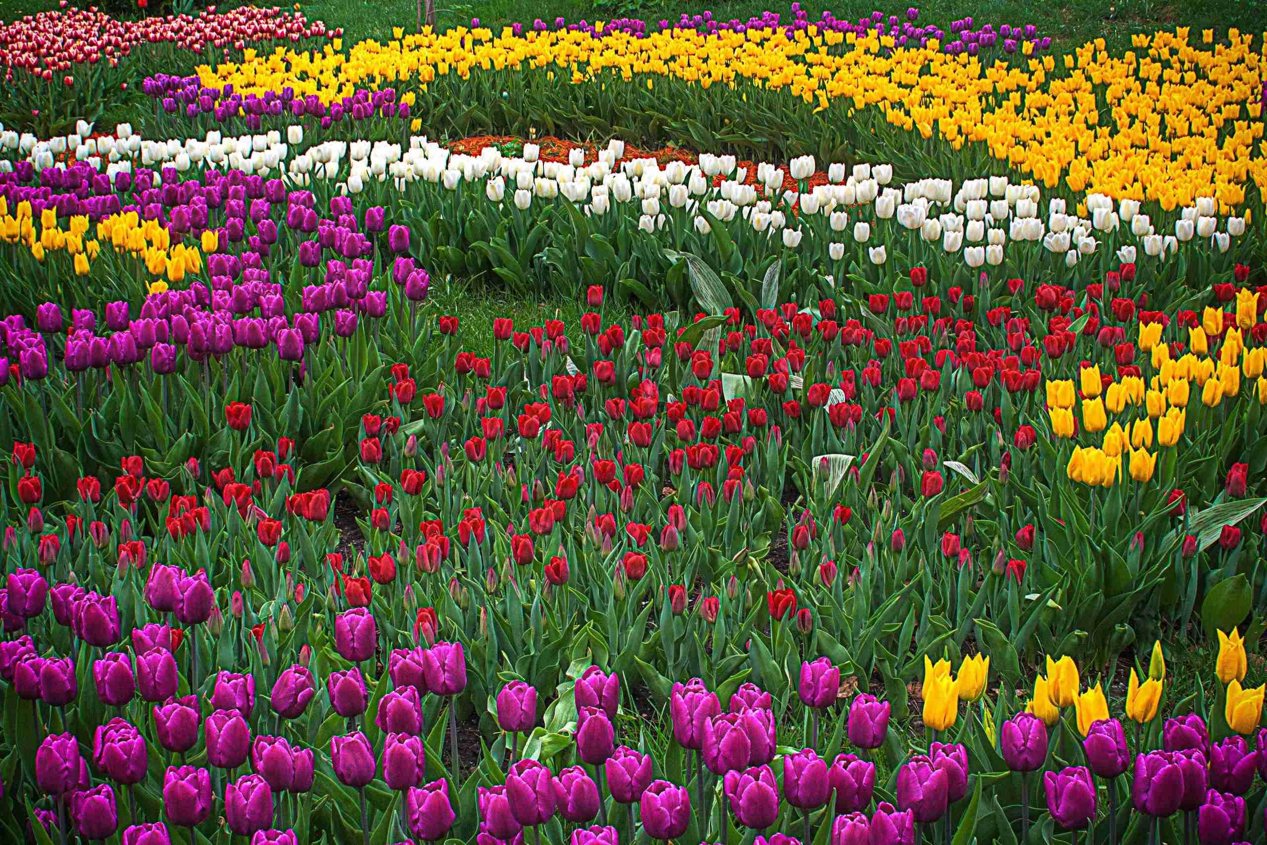 Tuinwerk